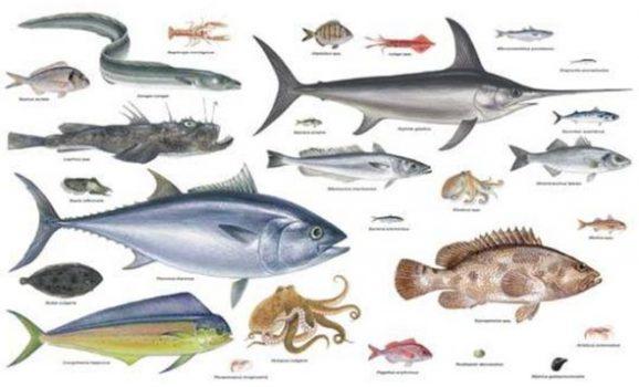 Specie di pesci